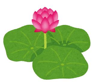 銭の花は清らかに白い。でもその蕾は血が滲んだように赤く、汗の匂いがする。(花登筺「銭の花」より)