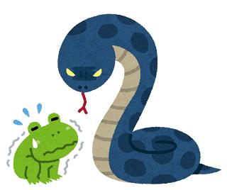 ヘビに睨まれたカエル